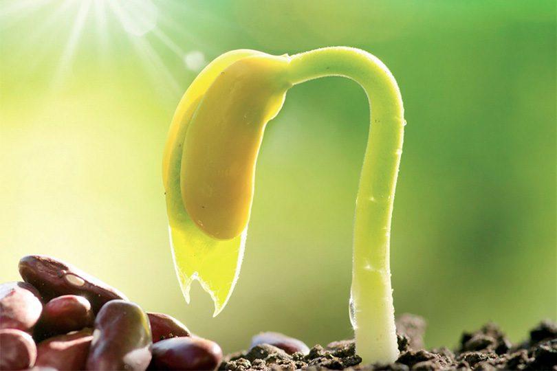 Tohumların enerjisi organlarla konuşuyor
